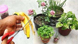 Melhor Adubo Natural para Todas as Plantas