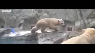 Животные помогают и спасают друг друга 2