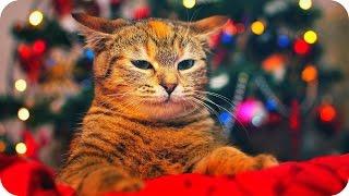 Смешные Кошки 2015! (#5) Веселая Видео Подборка! Смешные Животные 2015 /