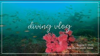 Diving vlog / 제주 서귀포 다이빙 (2020…