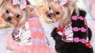 New Year Style Costume Pet Clothes