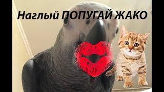 Попугай Жако пристает к кошке с поцелуями