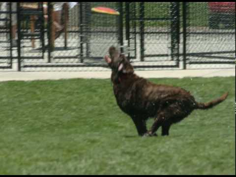 WagsPark Newtowns Premiere Cincinnati Private Dog Park
