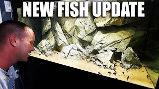 NEW FISH UPDATE