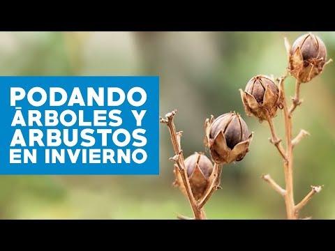 C mo podar rboles y arbustos en invierno youtube for Arboles en invierno