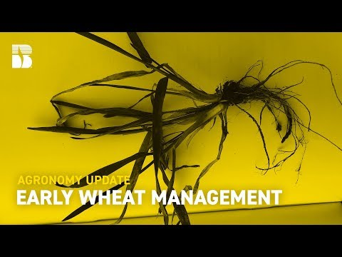 Early Wheat Management