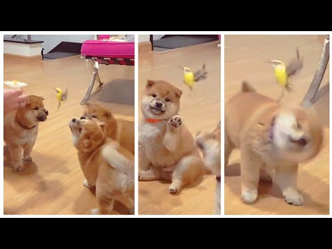 Puppies Meet Bird For The 1st Time! 🐦