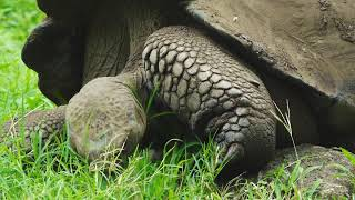 Teachers and Tortoises   Galápagos   Lindblad Expeditions-National Geographic