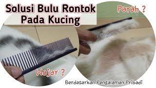 Mengatasi Bulu Rontok Pada Kucing | Bulu Kucing Rontok Parah
