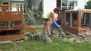Teaching Puppies To Sit