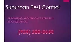 Flagstaff Pest Control - Pest Control Service in Flagstaff