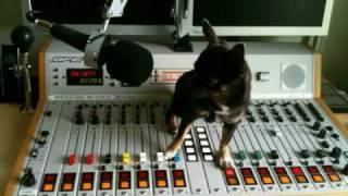 MP Electro Remix von Self-X / Stromberg (Hallo) Hund im Büro RMX