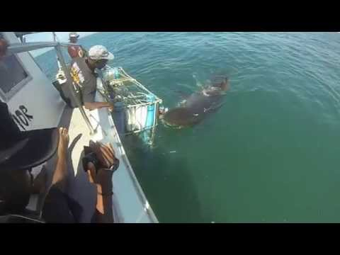 Shark Cage Dive Mosselbay