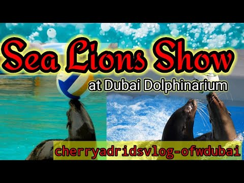 Funny Smart Cute Sea Lions Show/DUBAI Dolphinarium/Cherry