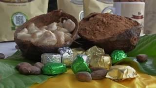 Agricultura al Día /  Del cacao al chocolate