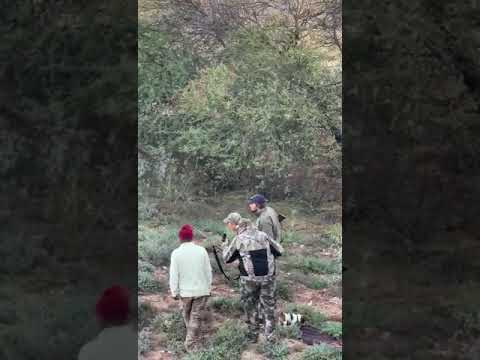Buffalo hunt gone wrong