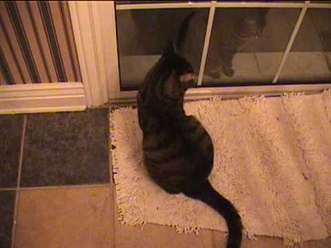 Catbook Movie: stupid cat tricks