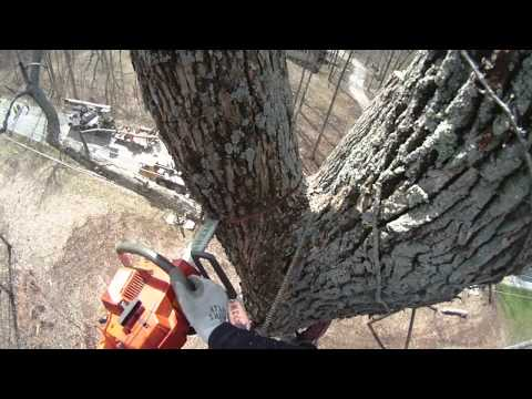 Tree Care Inc - Dayton, OH: Tree Crane Removal