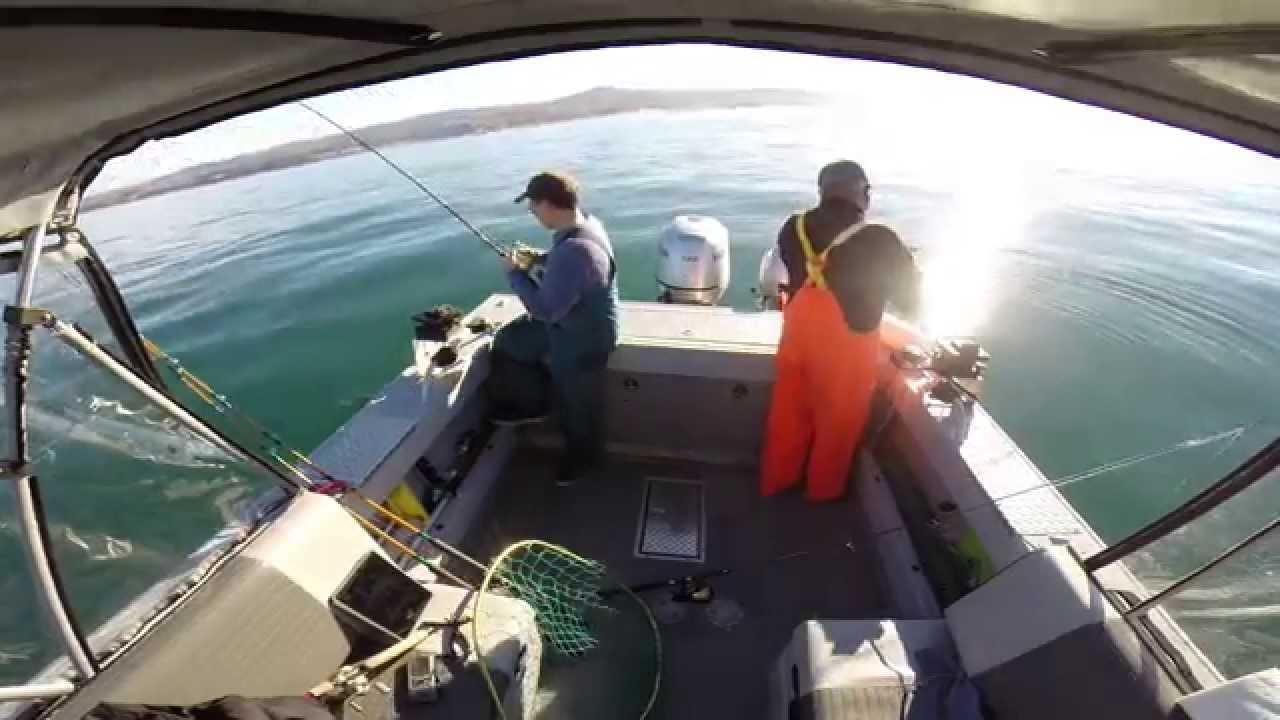 Hewescraft Sea Runner 200  Half Moon Bay Fishing 4 Lings in 10 mins