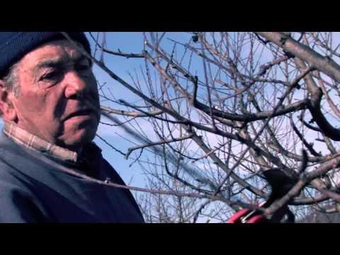 D' esquenes al Llobregat - Documental ecologista