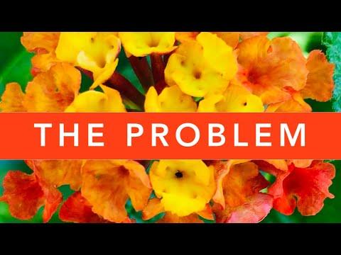 The PROBLEM with Lantana Camara