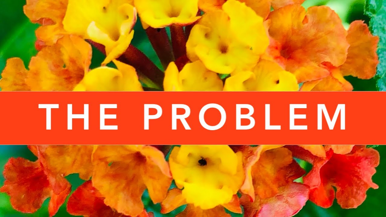 Download The PROBLEM with Lantana Camara