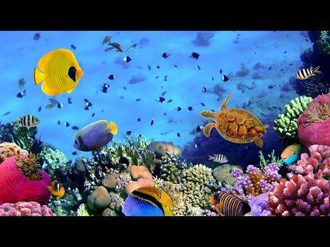 Океаны ⁄ Oceans 1080p