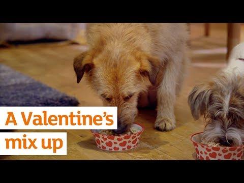 A Valentine's mix up   Valentine's Day   Sainsbury's