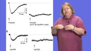 Eve Marder (Brandeis University) Part 2: Neuromodulation