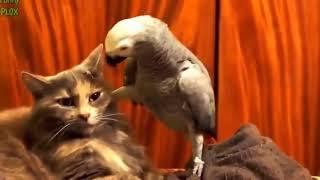 Кошки и попугаи.