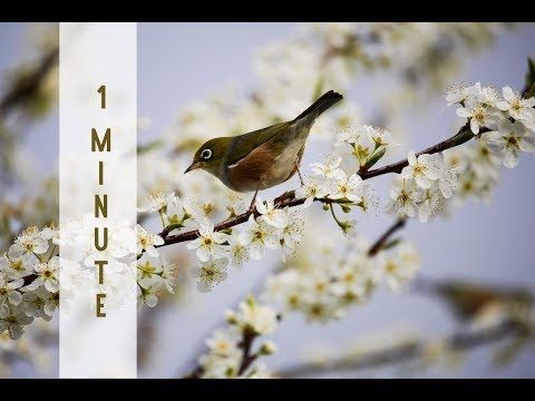 Reiki Timer 1 Min - Reiki Music with Bells Every 1 Minute