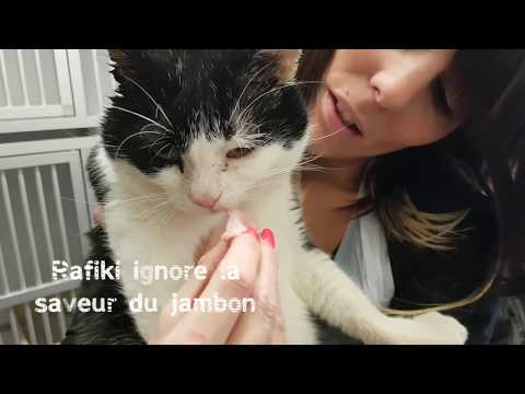 2 chats que tout oppose - SPA de Strasbourg