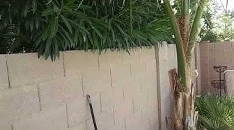 Are Your Neighbors Growing Bugs?! Phoenix & Scottsdale Scorpion Control - NaturZone Pest Control