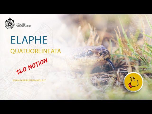 -Cervone- Slo Mo