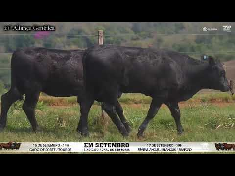 LOTE 091