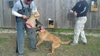 Us K9 Unlimited Dog Training Academy- Drake Abshire, Kaplan, La.