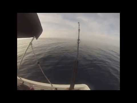Flying Fish Fishing Adventures on a 15ft Boston Whaler