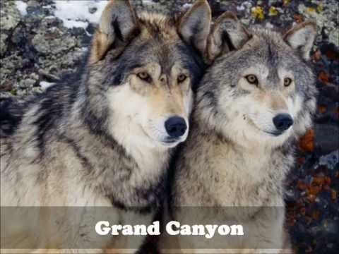 America's Wilderness - Grand Canyon Southern Rim .wmv