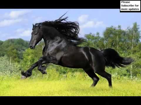 Clydesdale Horse | Picture Ideas Of Horses