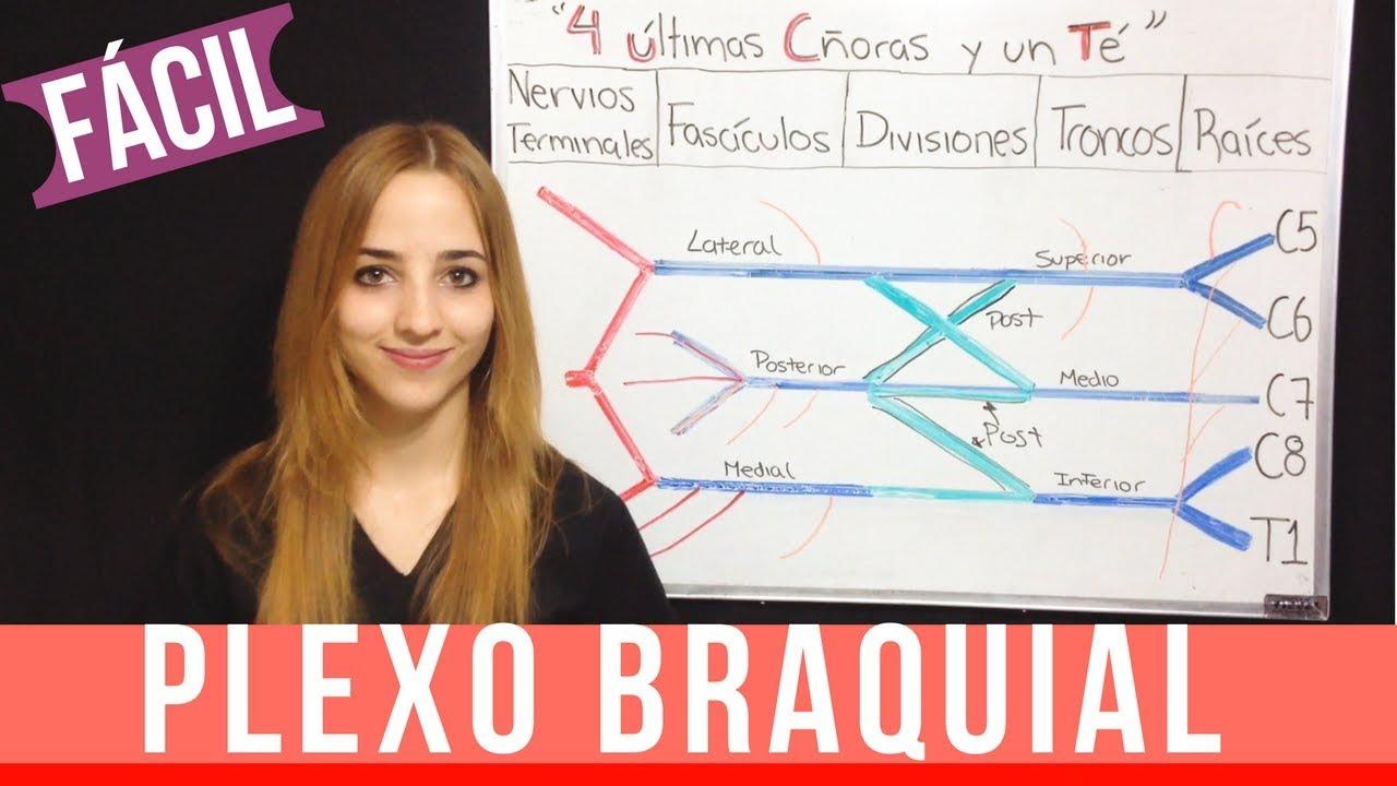 PLEXO BRAQUIAL FÁCIL EXPLICACIÓN + mnemotecnia ANATOMIA - YouTube