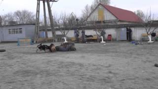 Воспитание хозяев и дрессировка собак!(, 2015-03-21T12:43:36.000Z)
