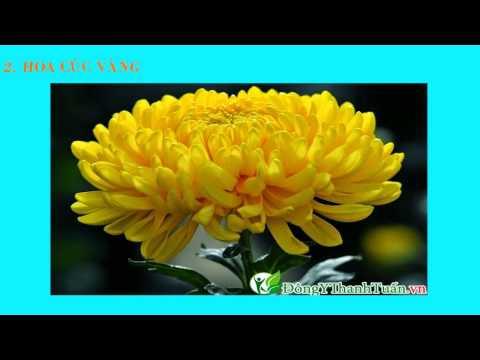 Khám phá cách chữa đau sâu răng nhanh nhất - www.dongythanhtuan.vn