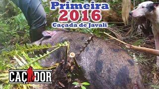 Caçada de javali - Primeira de 2016