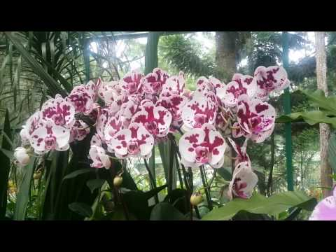 Путешествие. Сингапур. Сад орхидей.