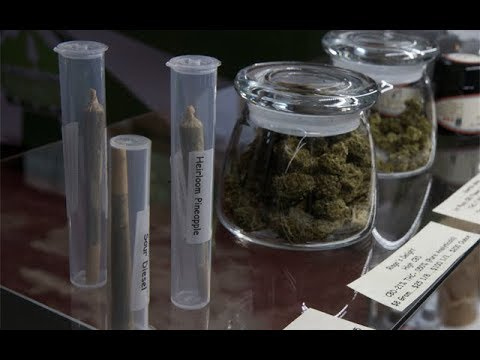 Cannabis News – Steady Support for Legalization | Ep. 514 | 10-24-2019