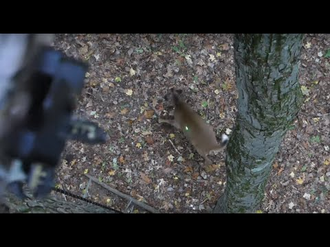 Saddle Hunting Bow Kill, NY
