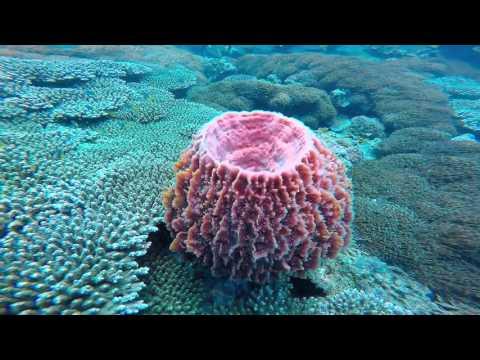 Scuba diving Great Keppel Islands [Gopro Hero 4 HD]