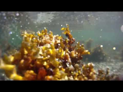 Norwegian sea underwater