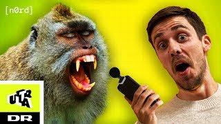 Dance Monkey KUN med lyde fra ZOO | NØRD | Ultra