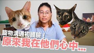 寵物溝通初體驗!貓咪心海底針啊...【好味貓日常】EP10 thumbnail